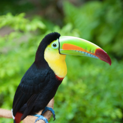 Costa Rica Experience - 9 days land only
